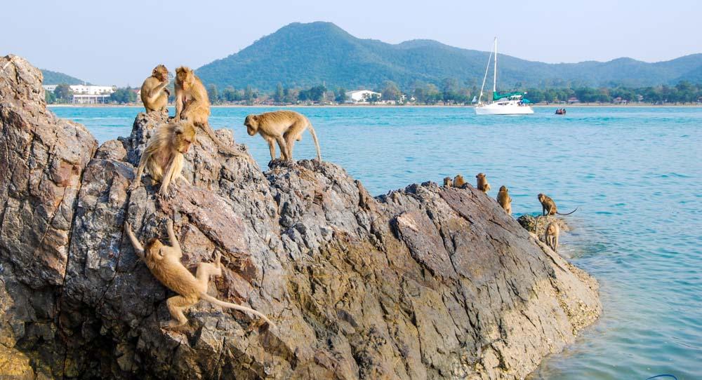 Остров обезьян.