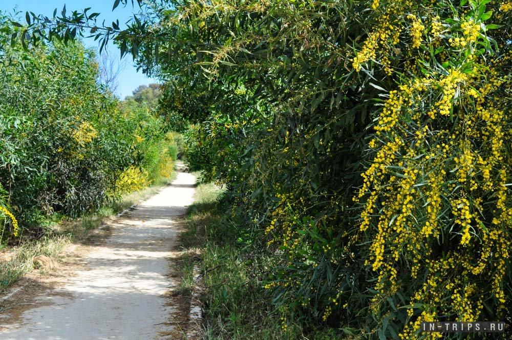 На тропе можно встретить цветущие растения, причём цветение тут встречается в любое время года.