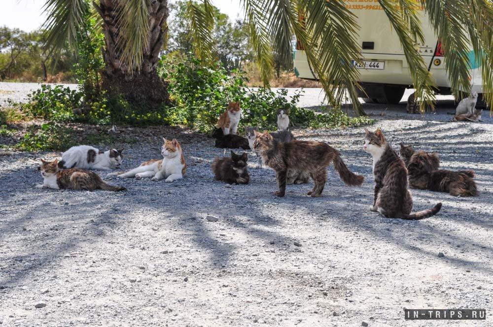 Кошки и котики на парковке перед входом в мечеть.